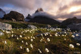 Greenland, Southern Greenland, Arctic Breeze, Arctic, Cotton