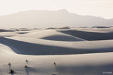 White Sands National Monument, New Mexico, White Sands, Barren Beauty
