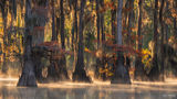 Caddo Lake, Texas, Caddo, Lake, Enlightened, Swamp, Wetland, Water, Forested