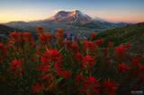 Mount St. Helens, Washington, St. Helens, stratovolcano, volcano, Pacific Northwest, Cascade Range, Seattle, Flower Posse, Flower