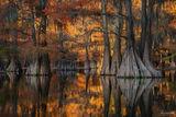 Caddo Lake, Texas, Caddo, Lake, Golden Glory, Golden, Bald Cypress, Cypress, Cypress Knees, Copper, Red, Tree, Trunk