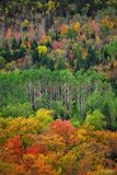 Lutsen, Minnesota, North Woods, Northwoods, Northwoods Contrast, Contrast, Laurentian Mixed Forest Province, Great Lakes