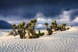 Mojave Desert, California, Overtaken, Mojave, Desert, Joshua Trees, Trees