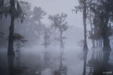 Caddo Lake, Texas, Caddo, Lake, The Illusion, Illusion