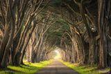 Point Reyes National Seashore, Point Reyes, National Seashore, California, The Light Within, Light, Marin County, Nature Preserve