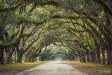 Wormsloe Plantation, Wormsloe, Plantation, Savannah, Georgia, The Long Journey, Historic, Estate, Southeastern