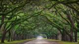 Wormsloe Plantation, Wormsloe, Plantation, Savannah, Georgia, Tunnel Vision, Tunnel, Tree Tunnel, Canopy