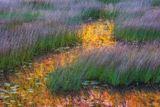 Acadia National Park, Maine, Acadia, National Park, Park, Bar Harbor, Watercolor Memories, Watercolor, Mount Desert Island, Schoodic Peninsula