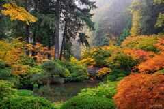 Portland Japanese Garden, Portland, Oregon, Japanese Maple, Tree, A Place of Peace