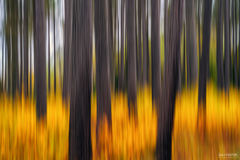 Lutsen, Minnesota, Alight, Intentional camera Movement, ICM