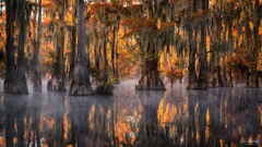 Caddo Lake, Texas, Bayou Drapery, Mississippi River Delta, Gulf Coast, Louisiana