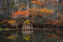 Caddo Lake, Texas, Canopy of Color, Louisiana