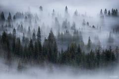 Yosemite National Park, California, Yosemite, National Park, Dreamwave, Trees