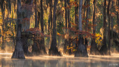 Caddo Lake, Texas, Enlightened, Swamp