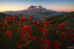 Mount St. Helens, Washington, St. Helens, stratovolcano, volcano, Pacific Northwest, Cascade Range, Seattle, Flower Posse, Flower
