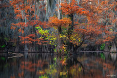 Caddo Lake, Texas, Holding On, Bayou, Southeastern, Cypress