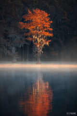 Caddo Lake, Texas, Illumination