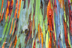 Rainbow Trees, Kauai, Hawaii, Eucalyptus, multi-colored bark, Rainbow Bright