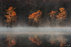 Caddo Lake, Texas, Smoke on the Water
