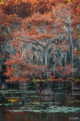 Caddo Lake, Texas, Surreal Canvas, Wetland