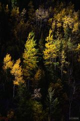 Ouray, Colorado, The Blink of an Eye, Million Dollar Highway, Aspen Trees