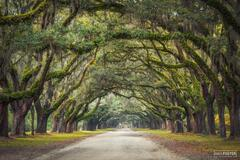 Wormsloe Plantation, Savannah, Georgia, The Long Journey, Historic, Estate, Southeastern