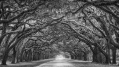 Wormsloe Plantation, Savannah, Georgia, Tunnel Vision, Tree Tunnel, Canopy, Black and White, Live Oaks, Monochrome