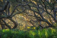 Cumberland Island, Georgia, Maritime Forest, Cumberland, Island, Forest, Trees, Coastal, Wooded, Atlantic, Twisted
