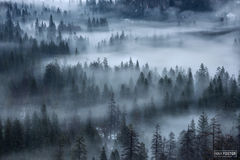Yosemite National Park, California, Yosemite, National Park, Whispering Pines, Pines, Pine Trees, Evergreen