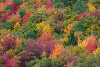 Vermont, Leaf Peeping, Fall Foliage, Autumn, New England, Artist's Palette