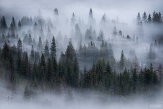 Yosemite National Park, California, Dreamwave, Trees