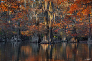 Caddo Lake, Texas, Last Light, Cypress Knee, Cypress Tree, Swamps, Louisiana