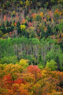 Lutsen, Minnesota, North Woods, Northwoods Contrast, Laurentian Mixed Forest Province, Great Lakes