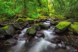 Moffett Creek, Columbia River Gorge, Oregon, Spring of Life, Pacific Northwest