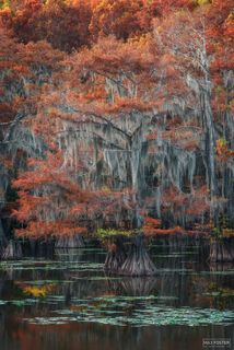Caddo Lake, Texas, Surreal Canvas, Wetland, Louisiana
