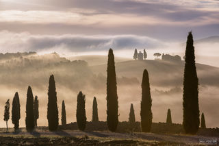 Val d'Orcia, Tuscany, Italy, Tuscan Dream, Tuscan, Dream, Mediterranean Cypress,  Italian Cypress,  Tuscan Cypress, Mediterranean, Cypress, Italian, Trees