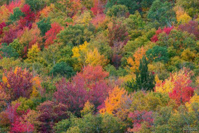 Vermont, Leaf Peeping, Fall Foliage, Autumn, New England, Artist's Palette