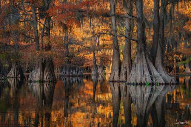 Caddo Lake, Texas, Caddo, Lake, Golden Glory, Golden, Bald Cypress, Cypress, Cypress Knees, Copper, Red, Tree, Trunk