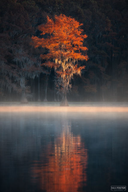 Caddo Lake, Texas, Caddo, Lake, Illumination