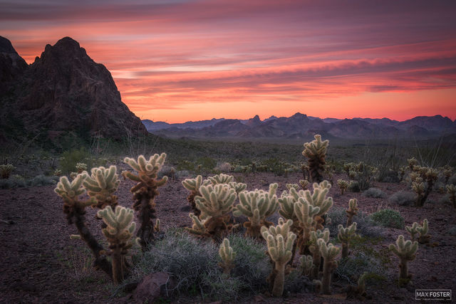 Kofa National Wildlife Refuge, Arizona, Sonoran Desert