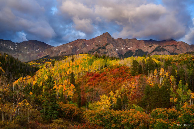 Ridgway, Colorado, Mountain Majesty, Ouray, San Juan Mountains, Aspen Trees