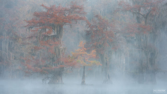 Caddo Lake, Texas, Nature's Mystery, Louisiana