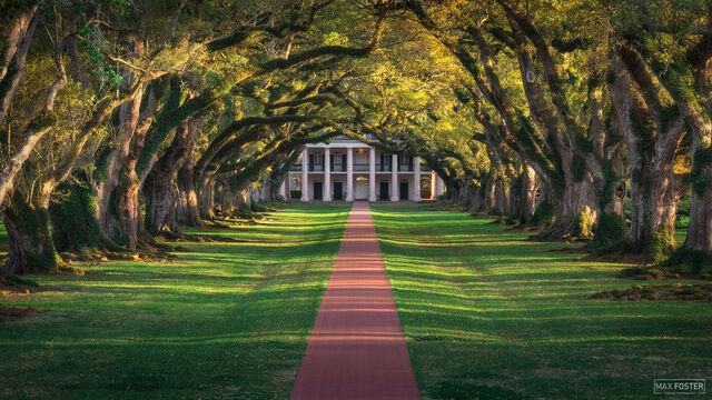 Oak Alley Plantation, St. James Parish, Louisiana, Tree Tunnel, Tree Canopy, Live Oak