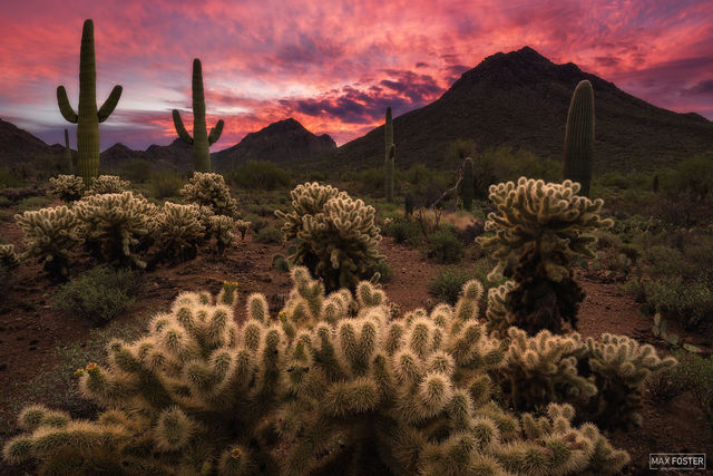 Tucson Mountain Park, Arizona, Skyfire, Sonoran Desert
