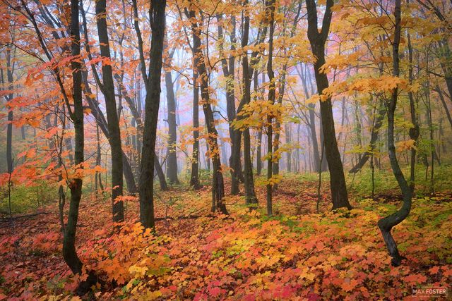 Autumn Transitions | Fall Nature Photography