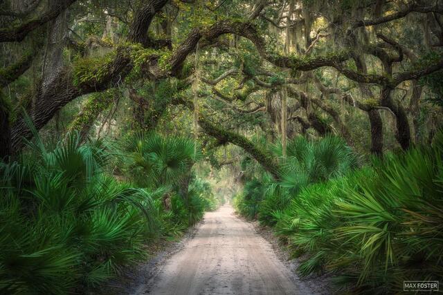 Cumberland Island, Georgia, Maritime Forest, Tree Tunnel, Welcome To The Jungle