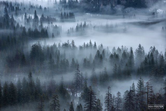 Yosemite National Park, California, Whispering Pines, Pine Trees, Evergreen
