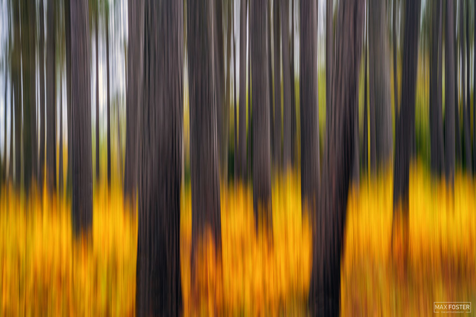 Lutsen, Minnesota, Alight, Intentional camera Movement, ICM