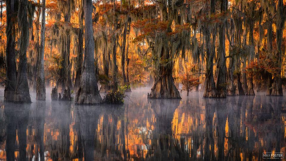 Caddo Lake, Texas, Bayou Drapery, Mississippi River Delta, Gulf Coast, Louisiana