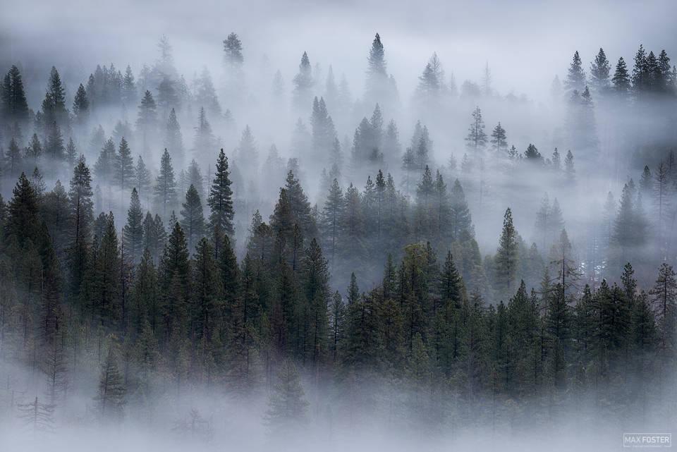 Yosemite National Park, California, Dreamwave, Trees